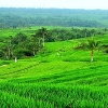 product - Bali Full Day Tour Package